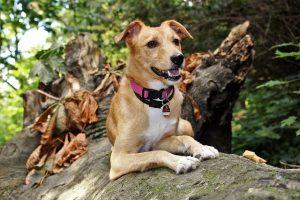Geld verdienen als Dogwalker – Hunde Gassi führen